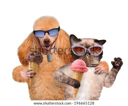 Dog with a cat eat ice cream. - stock photo