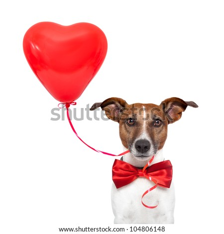 dog with a heart - stock photo