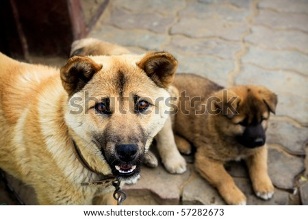 dog with a puppy - stock photo