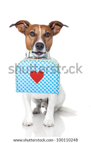 dog with a small luggage with a big heart - stock photo