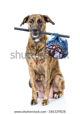 dog with a stick and a bag. isolated on white background - stock photo