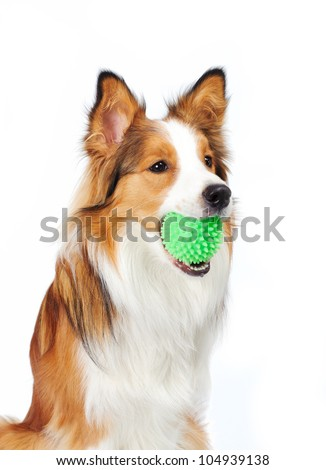 dog with ball - stock photo