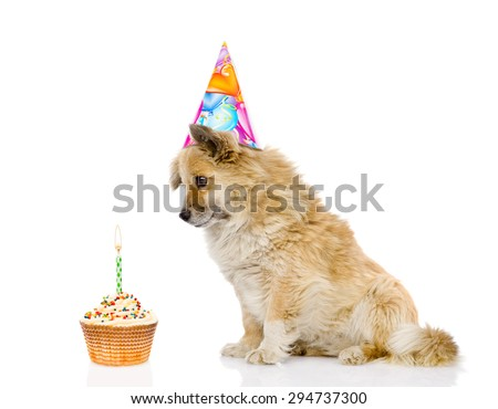 dog with birthday hat and cake. isolated on white background