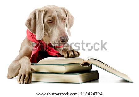 Dog with book isolated on white background