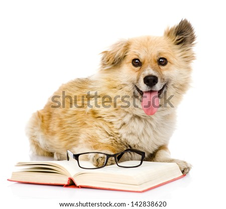 dog with book looking at camera. isolated on white background - stock photo