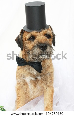 Dog with bow tie and top hat - stock photo