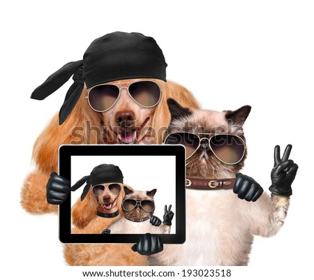 dog with cat taking a selfie together with a tablet - stock photo