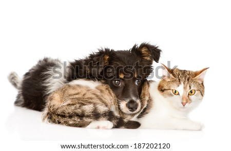 dog with cat together. isolated on white background - stock photo
