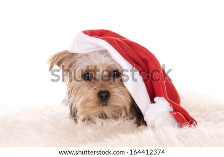 dog with christmas had isolated on white background