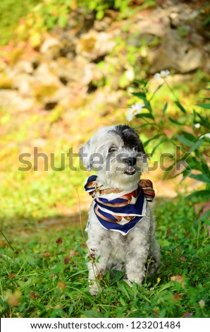 dog with colorful neck scarf in the garden - stock photo