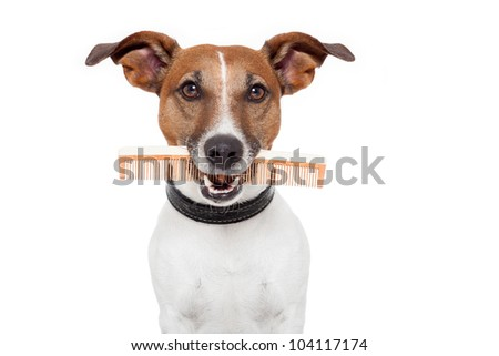 dog with comb - stock photo