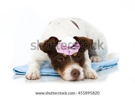 Dog with cooling bag - stock photo