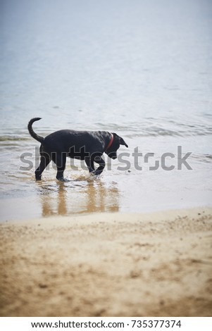 dog with crab on the beach