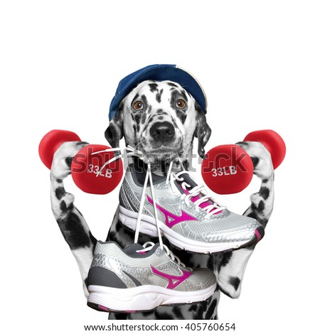 Dog with dumbbells playing sports -- running and jogging - stock photo