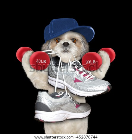 Dog with dumbbells playing sports -- running and jogging -- isolated on black - stock photo