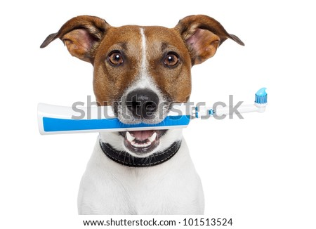 dog with electric toothbrush - stock photo