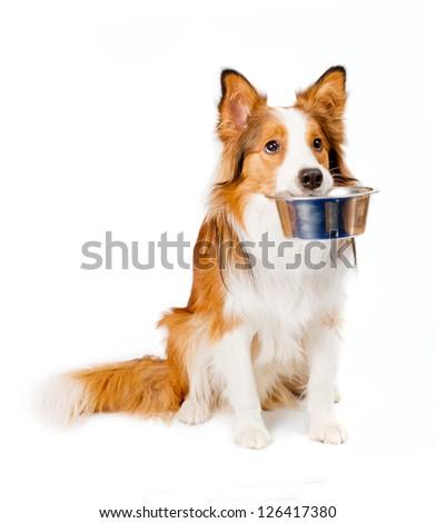 dog with empty bowl - stock photo