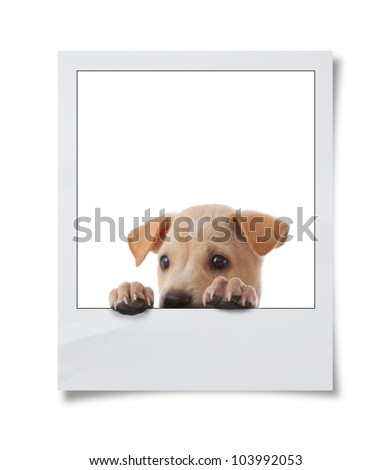 dog with empty frame on white background