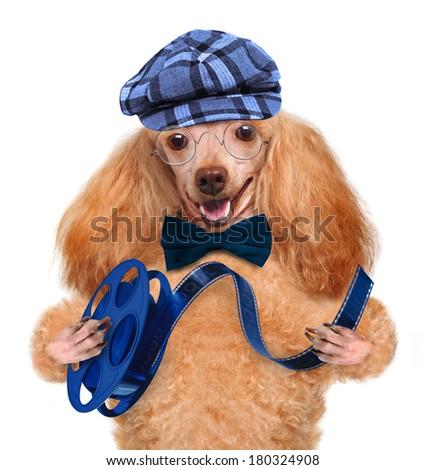 dog with film - stock photo