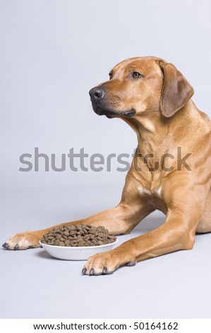 Dog with food - stock photo
