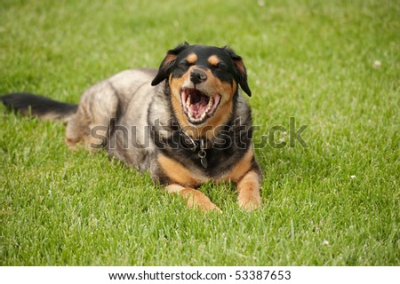 dog with funny expression