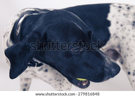dog with glasses - stock photo