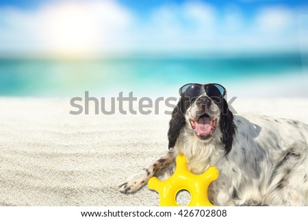 dog with glasses on the beach