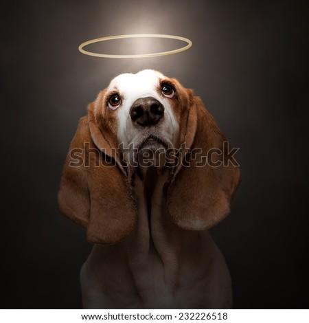 dog with halo - stock photo
