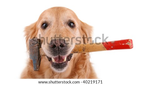 dog with hammer on white background - stock photo