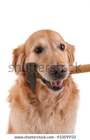 dog with hammer on white background