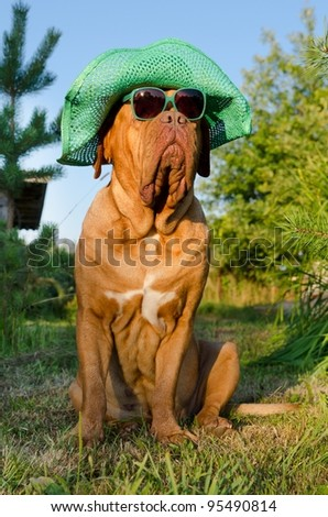 Dog with hat and glasses sitting in the garden - stock photo