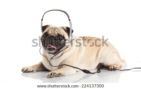 dog with headphones.