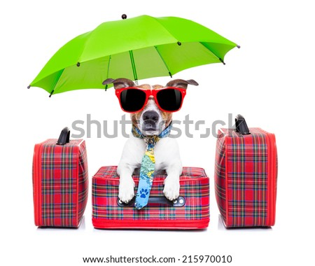 dog with luggage ready to go on summer holidays or vacation with umbrella and sunglasses - stock photo