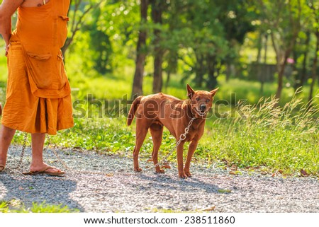 dog with monk owner working on road in the park - stock photo