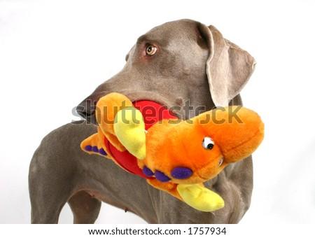 Moppet Dog Breed