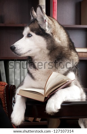 dog with open book on table - stock photo
