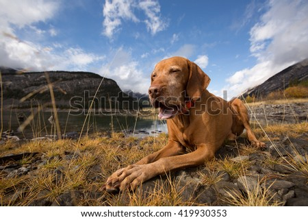 dog with open mouth laying on ground