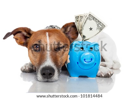 dog with piggy bank - stock photo