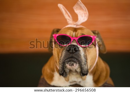 Dog with pink sunglasses