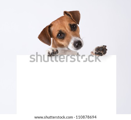 Dog with placard. Jack Russel terrier above white banner. template for gift certificate. Mockup  - stock photo