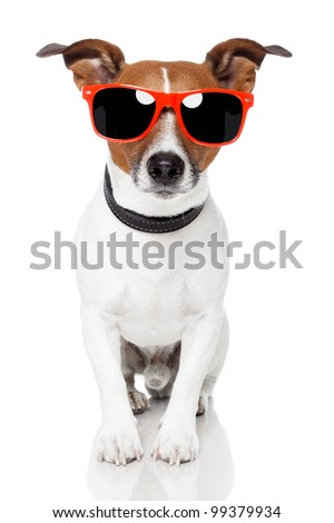 dog with red shades - stock photo
