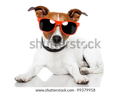 dog with red shades on
