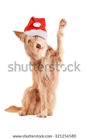 Dog with santa hat waving, isolated on white background - stock photo