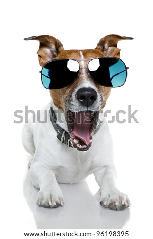 dog with shades