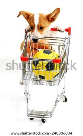 Dog with shopping cart isolated on white - stock photo