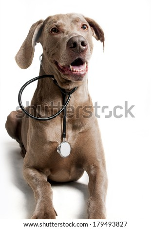 Dog with stethoscope on the white background