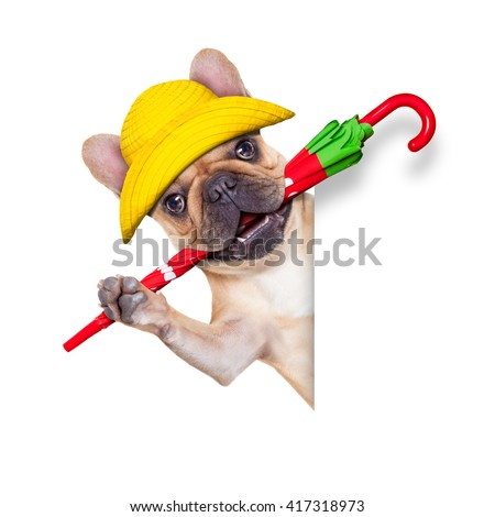 dog with umbrella ready for bad weather and rain isolated on white background behind banner and placard