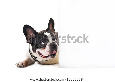Dog with white card over bright background - stock photo