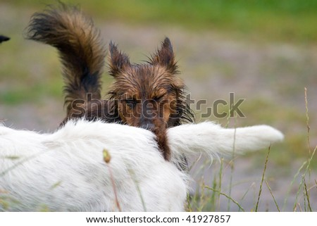 dog without name walking on green grass