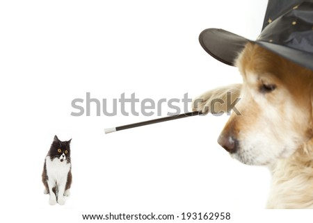 Dog Wizard enchanting a poor Persian cat - stock photo